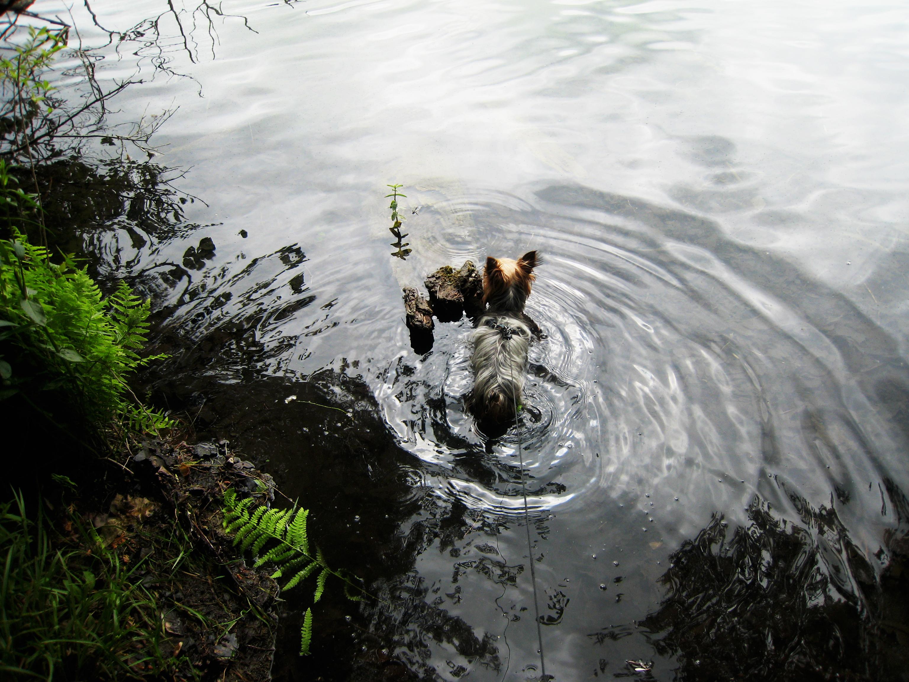 Baci's First Swim